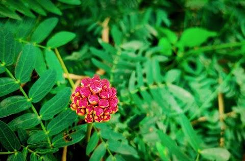 Beautiful Flower HD Wallpaper Free Stock [ Download ]