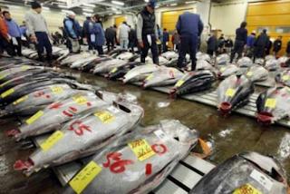industri perikanan tangkap jepang