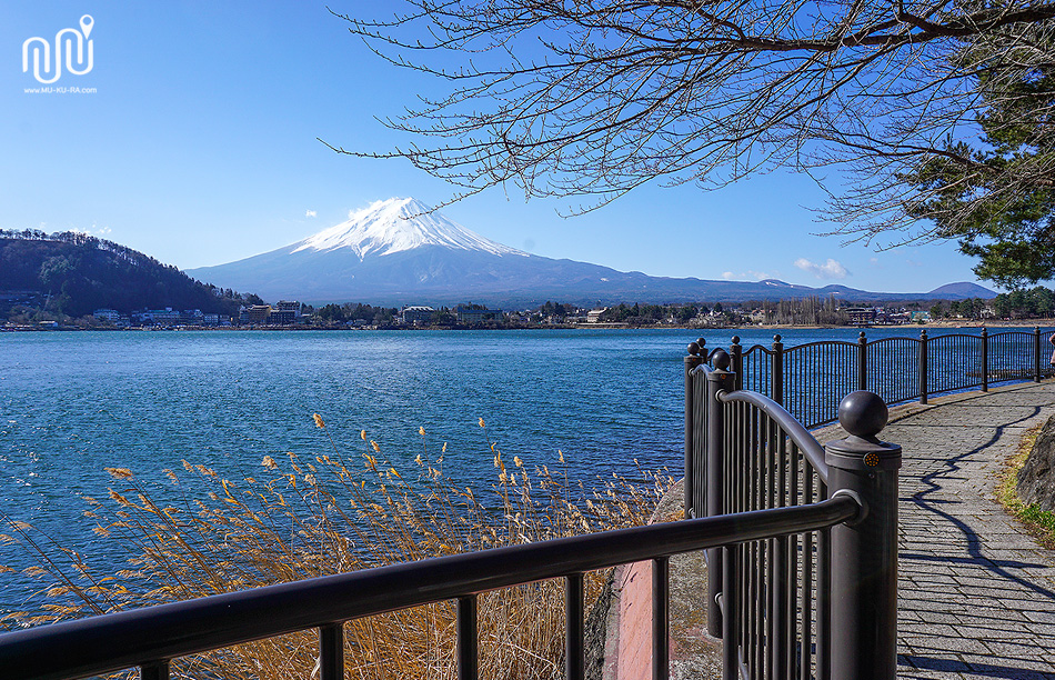 เช่าจักรยานขับที่ kawaguchiko ชมภูเขาไฟฟูจิ