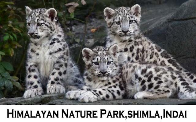Himalayan Nature Park Shimla