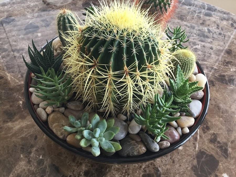 Cómo cuidar tus cactus miniatura