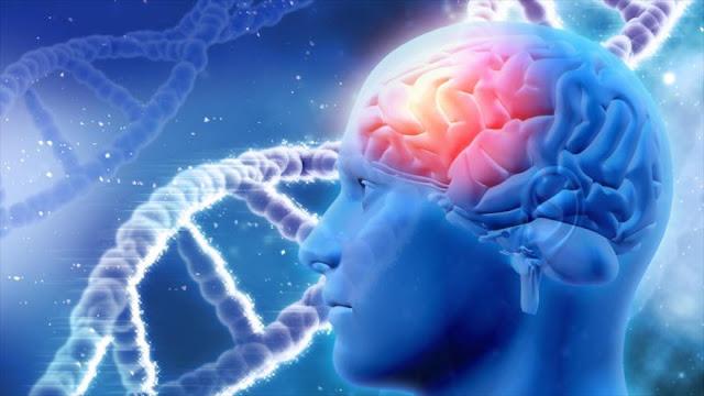 Un estimulador magnético puede borrar y activar recuerdos