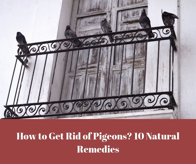 Get rid of pigeons sitting on the balcony