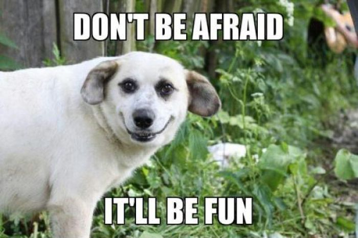 don t be afraid it ll be fun best of funny memes