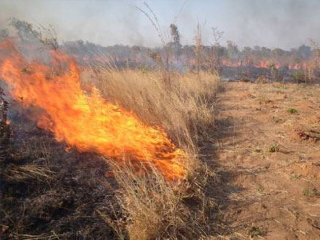 Πρόστιμο επειδή έκαιγε ξερά χόρτα στο Πόρτο Λάγος