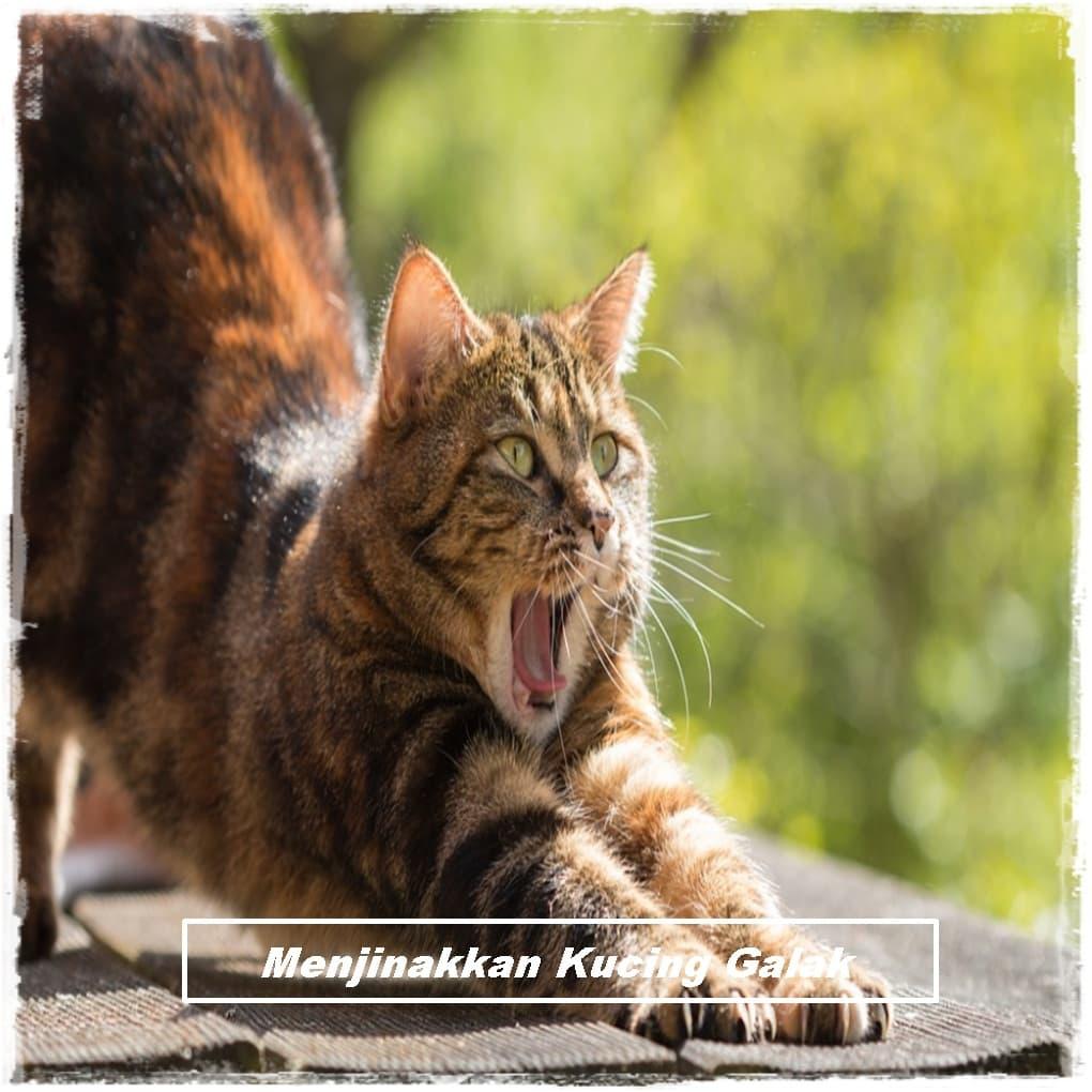 Cara Menjinakkan Kucing Galak, Liar atau Baru di Adopsi