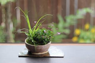 盆栽作品 半月の陶板の上
