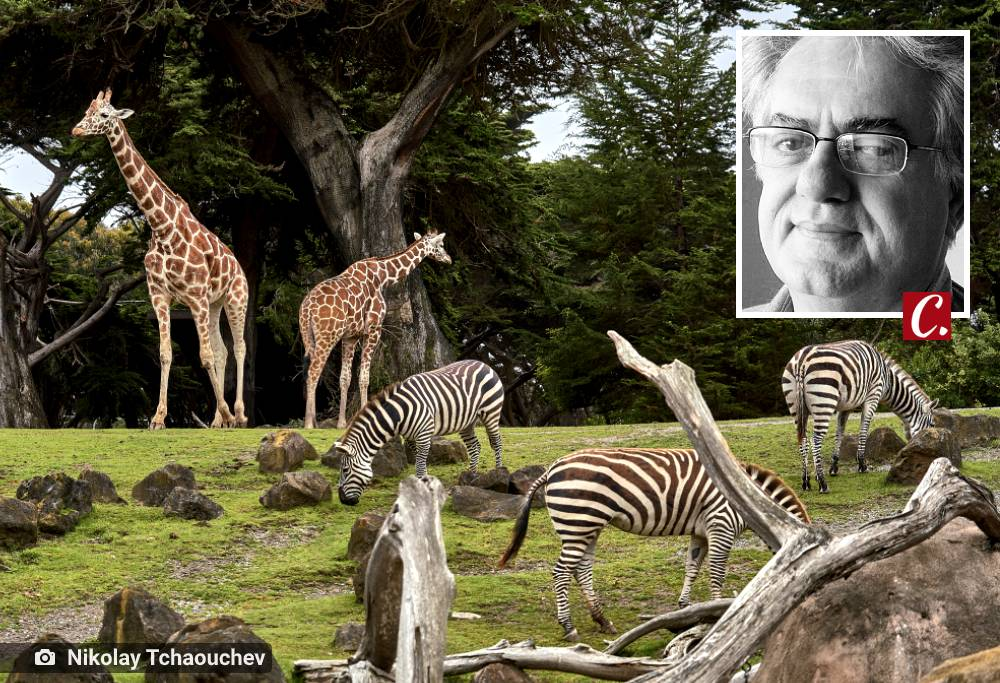 literatura paraibana sergio castro pinto zoo imaginario poemas