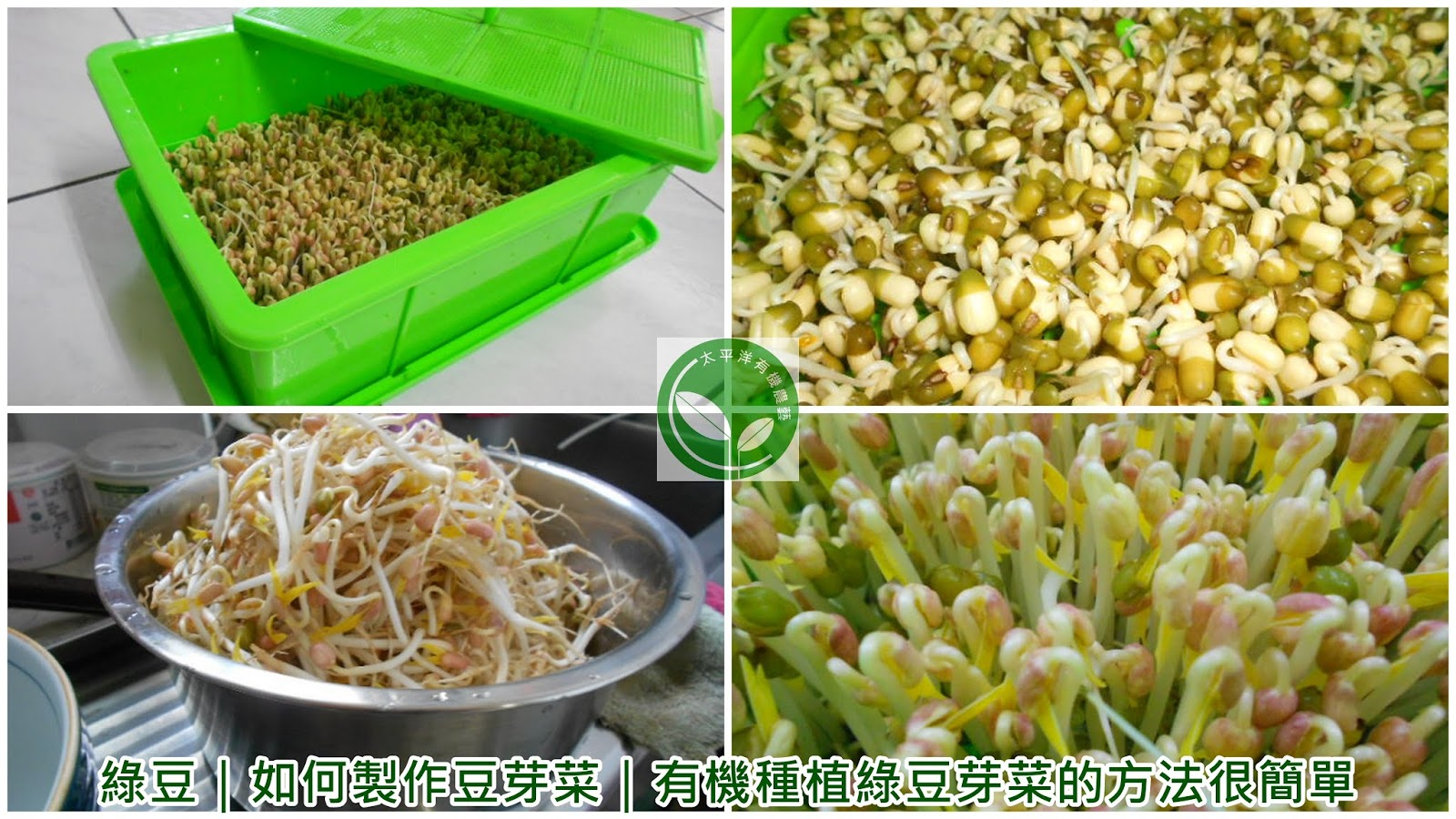 有機綠豆芽菜種子|有機綠豆芽苗菜:太平洋有機農藝-有機水耕種植有機綠豆芽菜苗