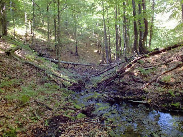 Река, в которой мы набирали воду