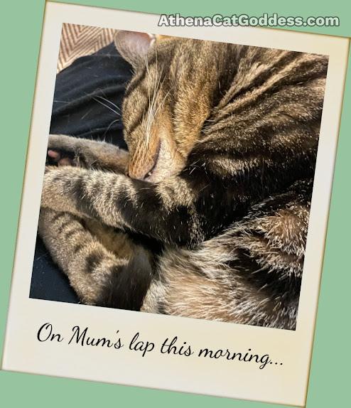 tabby cat napping