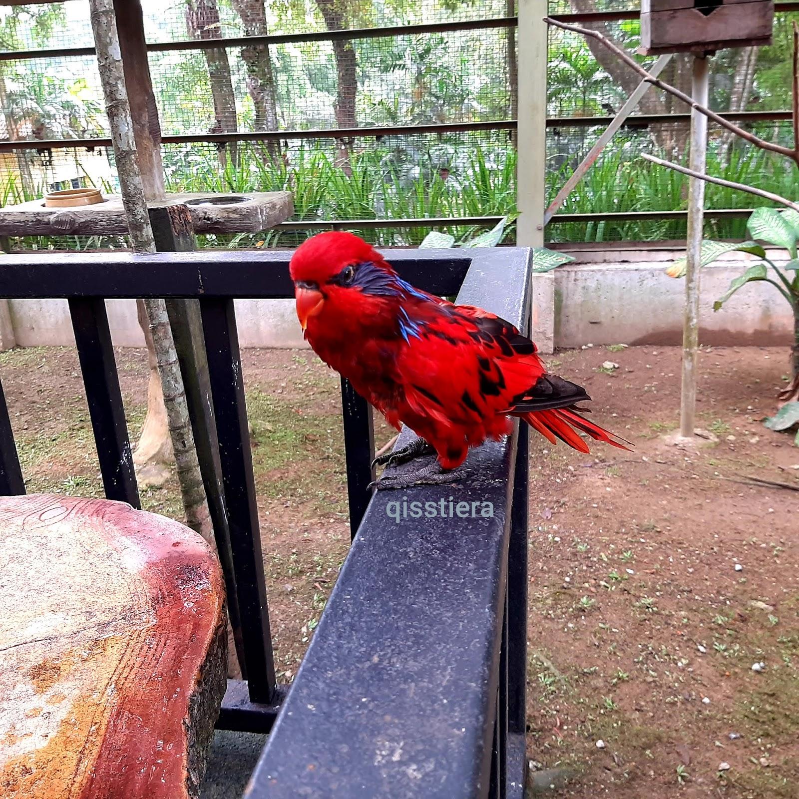 Lumpur di kuala taman haiwan Taman Awam