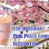 Raikan Musim Bunga Di Starbucks Dengan Minuman Baharu Pink Peach Crème Frappuccino