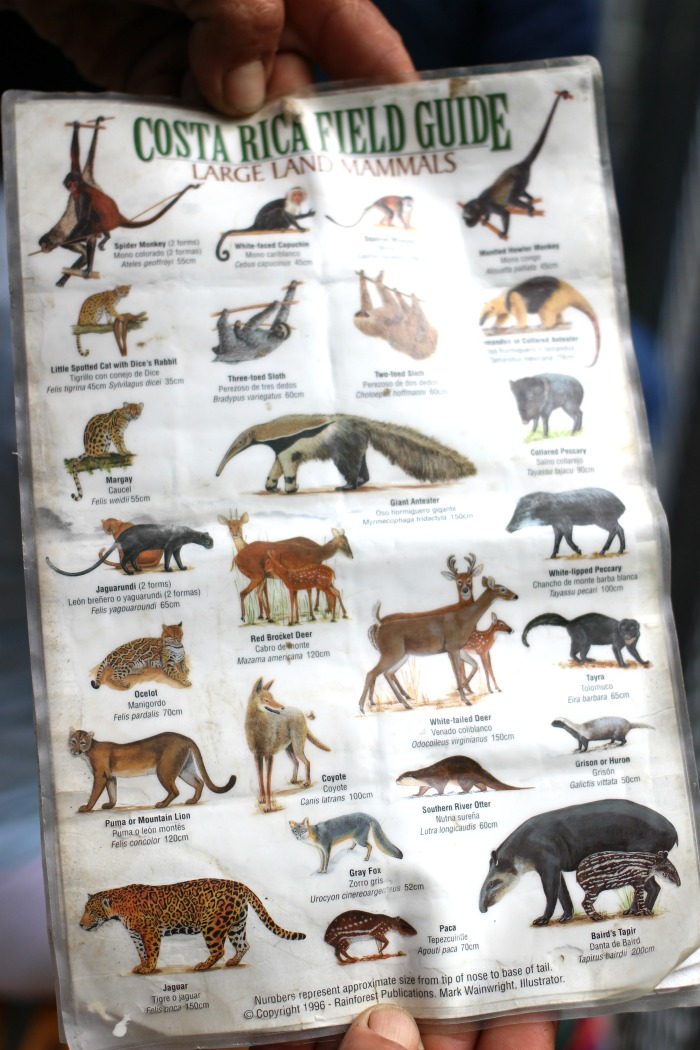 What animals will I see in Costa Rica