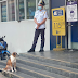 Loyal dog waiting outside for owner becomes a darling of Savemore store in Caloocan