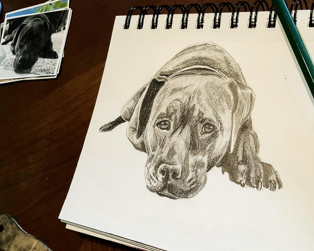 pitbull drawing