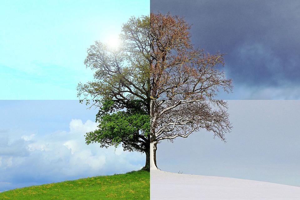 5 Plantas De Exterior Resistentes Al Frío Y Al Calor Amigos De La