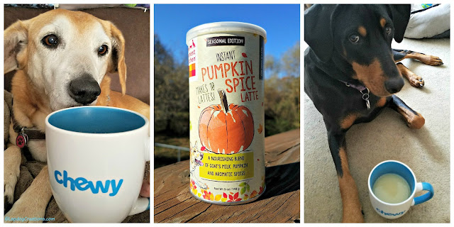 pumpkin spice latte dogs cats honest kitchen
