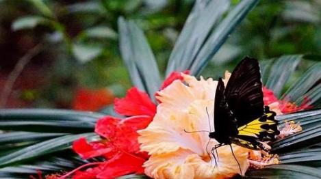 Wisata Kupu-kupu dan Istana Buton