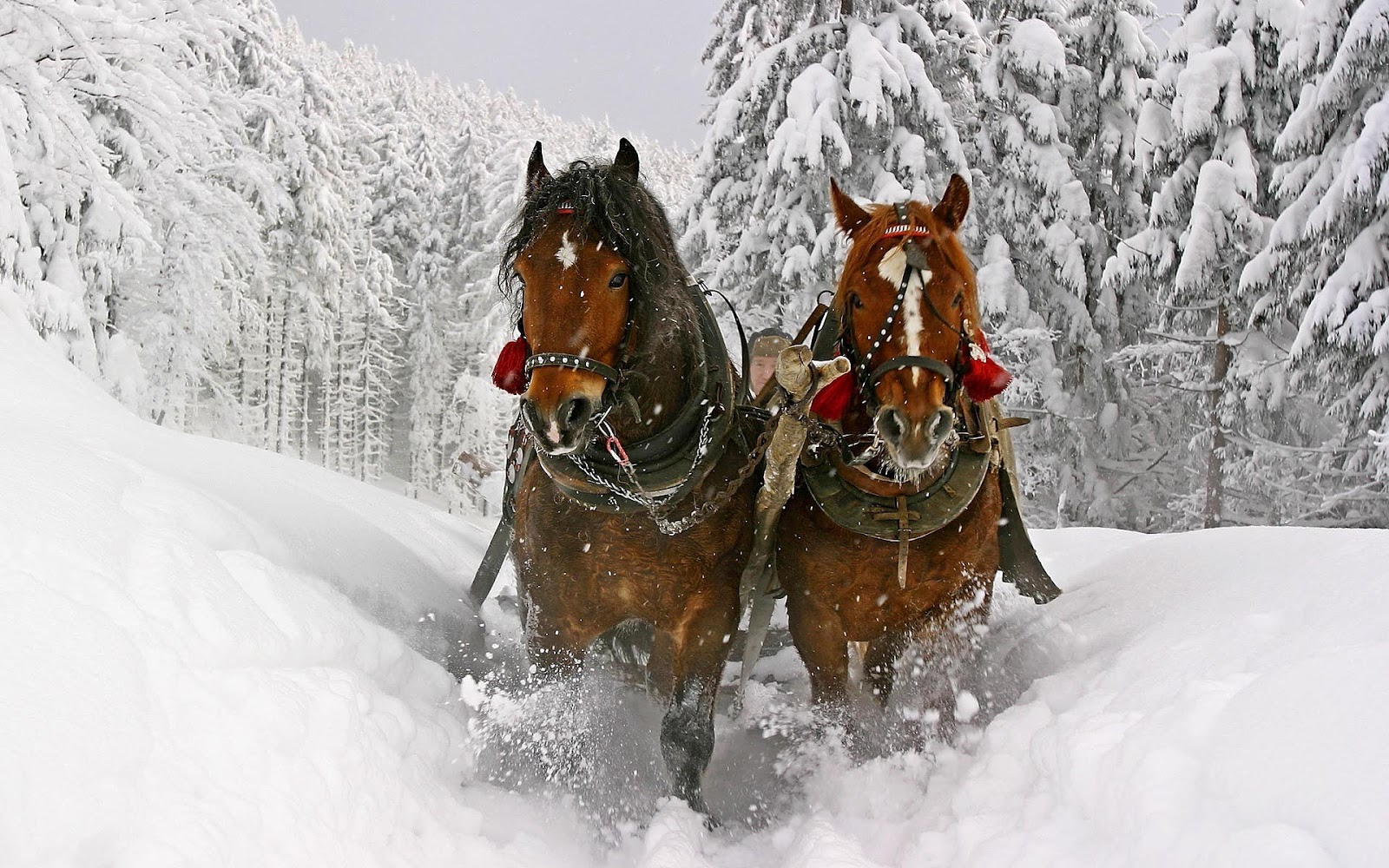 Desktop christmas horse wallpapers collection 12 wallpapers christmas horses horses animals background wallpapers on voltagebd Image collections