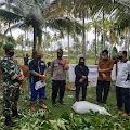 DKPP Memtawai Berikan Bantuan 14 Ekor Sapi Kepada Desa Sigapokna