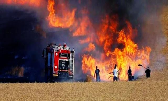 تونس : 117 حريقا في مناطق غابية ومزارع للحبوب منذ بداية السنة