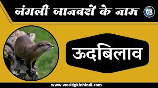 Otter Animal Name In Hindi