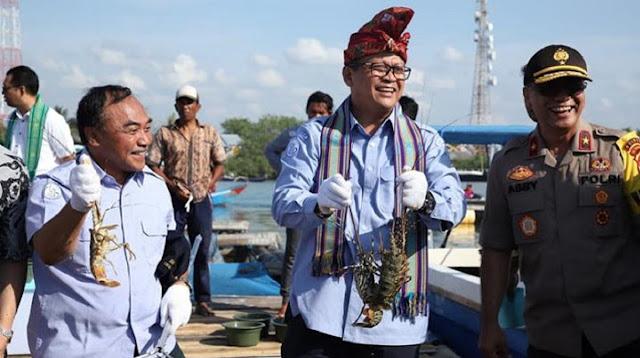 Edhy Prabowo Akui dari 26 Eksportir Lobster Ada dari Gerindra