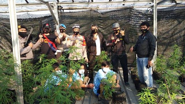 Polisi Grebeg Ladang Ganja Ditemukan di Tangerang, 47 Pohon Ganja Disita