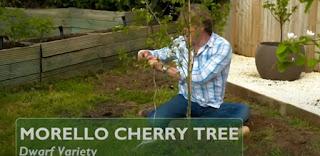 David Domoney planting cherry tree
