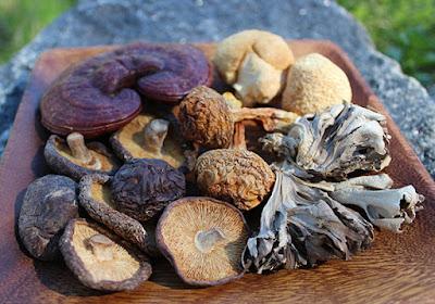 Scope of Mushroom Business in Chandigarh