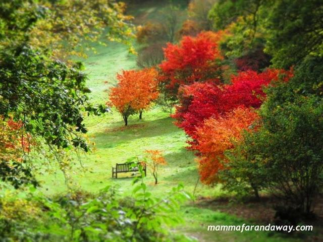 arboreto inghilterra