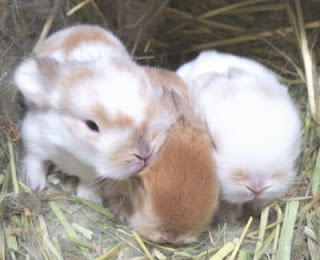 10-year old bunnies