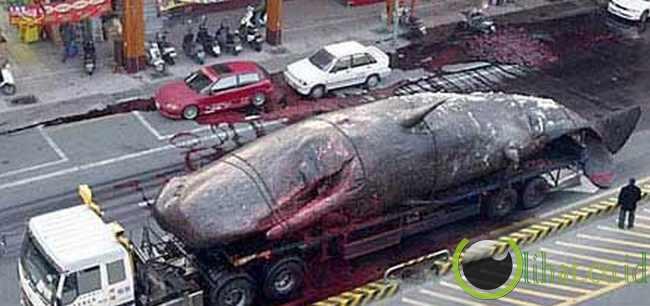 50 ton-paus meledak di jalur kawasan perbelanjaan