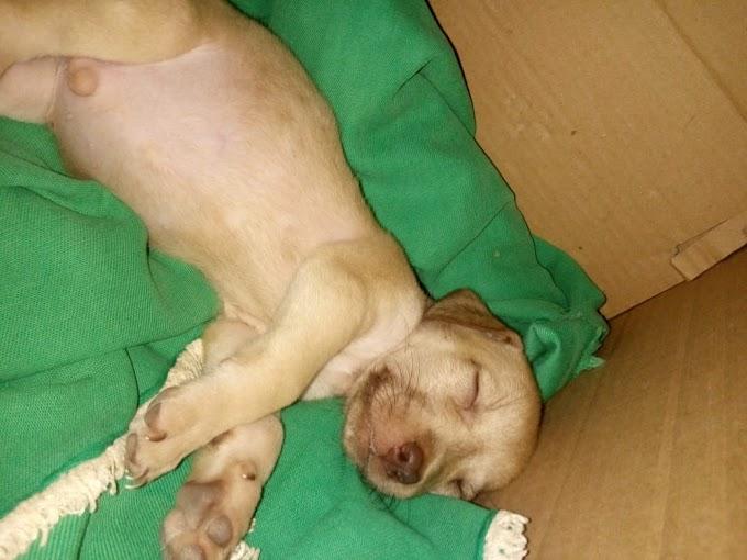 Cachorro morre após queima de fogos em Grossos