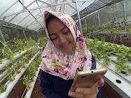 Kebun Benih Hortikultura Clapar Subah