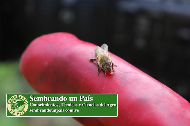 abeja saludable