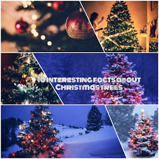 Interesting Facts About Christmas.10 Interesting Facts About Christmas Trees