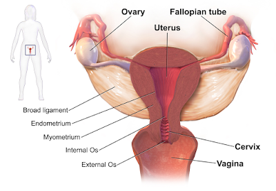 Vaginal discharge - Treatment must be needed