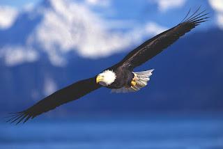 Eagles Poetry poem