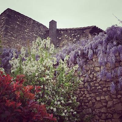 Provence Glycine Wisteria #flowfleurs2016 Printemps Petits bonheurs Pensée positive Count your blessings