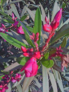 natural image photography,natural images download,natural image 3d,natural image hd,images of nature beauty,nature image hd,nature images download,natural images in world,amazing natural images in the world,beautiful natural images in the world, images of natural disasters in the world,natural images in the world,natural images in world download,natural images in world hd,natural images of world,royalty-free natural images in world, free natural image in the world,royalty-free photo,natural image royalty-free,free photo,neetsman,concept of knowledge