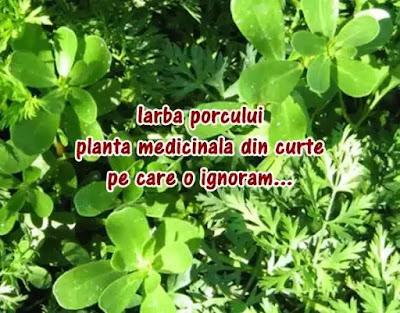 iarba grasa aka iarba porcului pareri forumuri beneficii si conservare