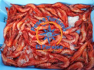 gamba%2Broja%2Bparaiso - Discriminación de la Dirección General de Pesca Sostenible del Ministerio de Agricultura, Pesca y Alimentación