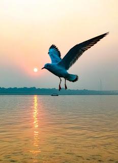 Bird Photography, Kumbh 2019, Siberian birds in Allahabad