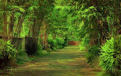 landscape kerala