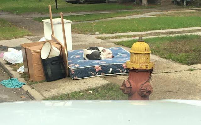 Целый месяц брошенный пёс ждал, что за ним вернутся хозяева