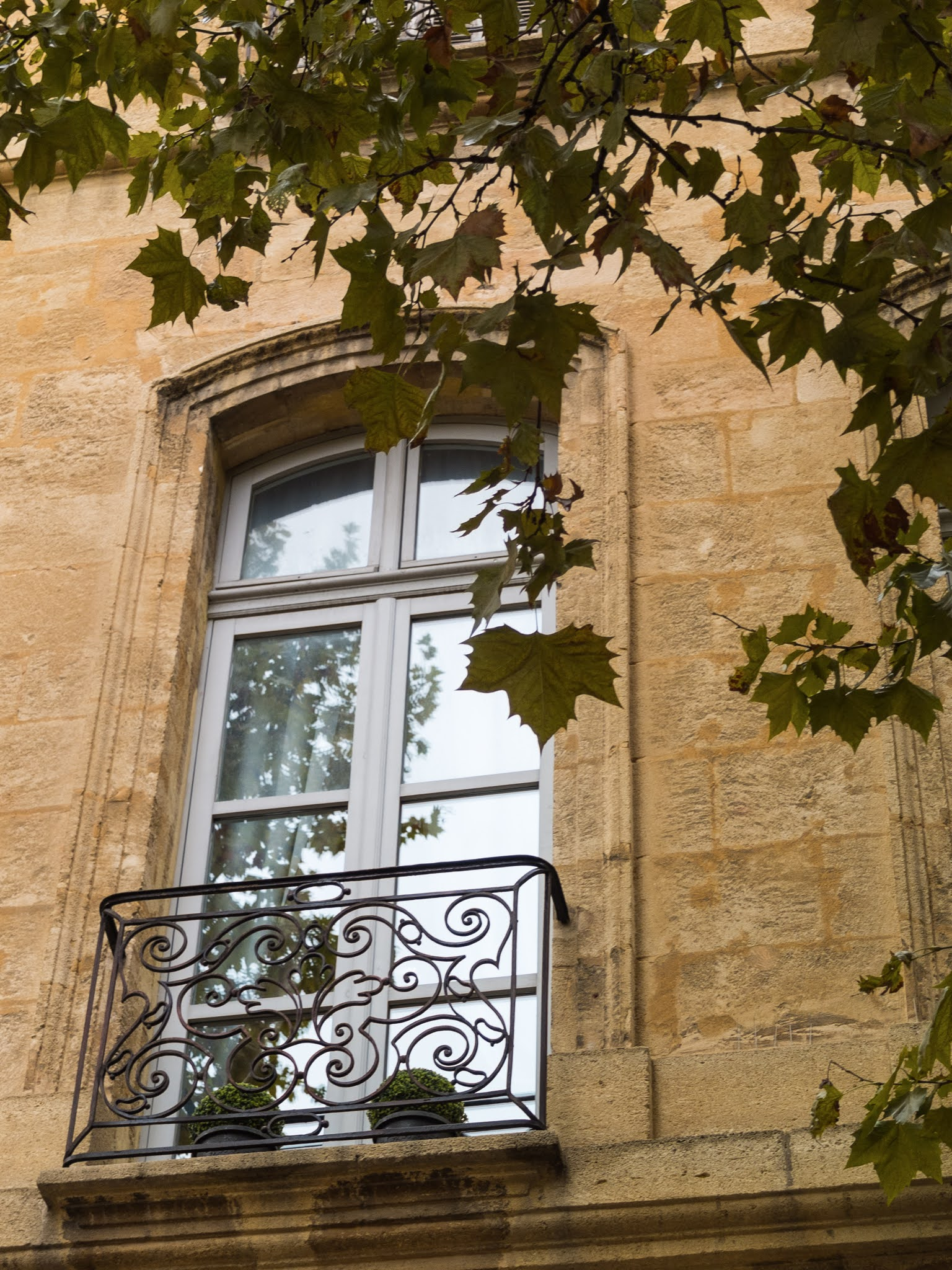 Tall window in Aix-en-Provence framed by a black railing and plane tree branches and leaves.
