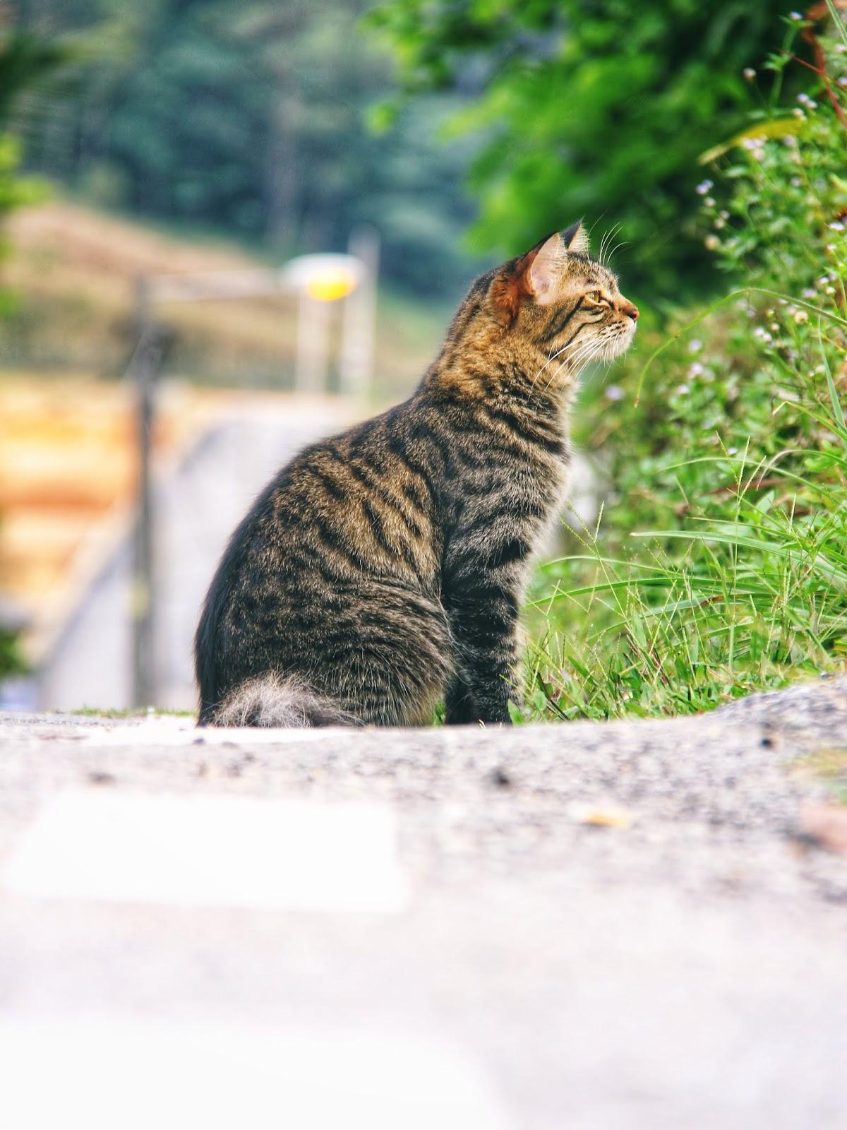 20 Koleksi Gambar Kucing Comel Bernama Tambi 4