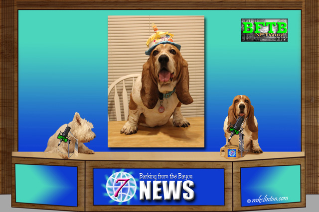 BFTB NETWoof News Bentley's 9th birthday is coming